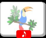 http://www.aprendomusica.com/swf/kookaburra.htm