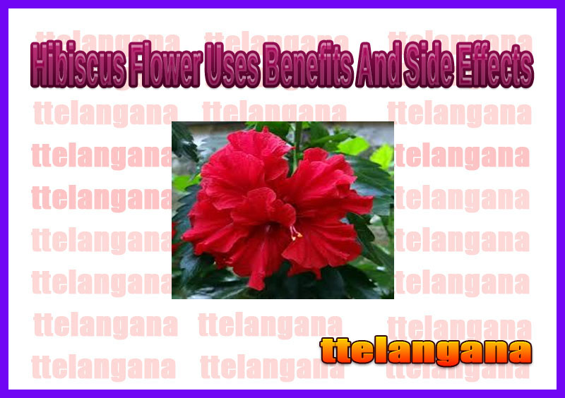Hibiscus Flower Uses Benefits And Side Effects