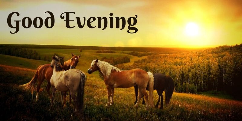 good evening friends wallpaper