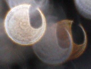 eggplant-shaped orb hole