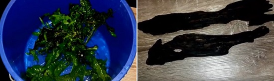 Java fern is inside the bucket & driftwood is on the table