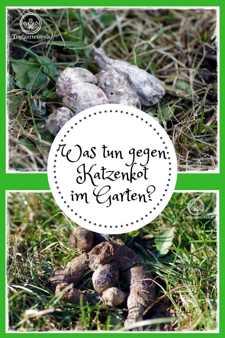 Fesselnd Was Tun Gegen Katzenkot Im Garten? Gartenblog Topfgartenwelt: #Katzenkot  #Maßnahmen #Garten