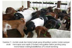 menghitung INDEK PRODUKTIVITAS INDUK sebagai tolak ukur produktifitas ternak kambing