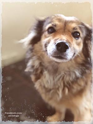 Perros, Dama