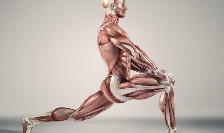 Apa Otot Terbesar dan Terkecil di Tubuh Kita? | Belajar Sampai Mati