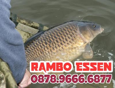 Rambo Essen Ikan Mas Kilo Gebrus