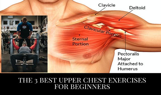 The 3 BEST Upper Chest Exercises For Beginners