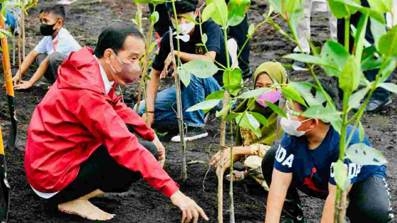 Presiden Jokowi Bersama Masyarakat Bengkalis Lakukan Penanaman Mangrove