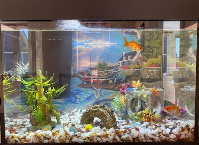 Fish tank with two goldfish
