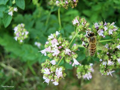 Για να μην μας τσιμπάνε οι μέλισσες
