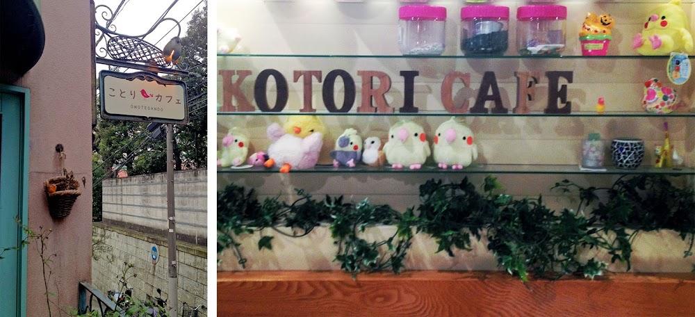 kotori bird cafe tokyo