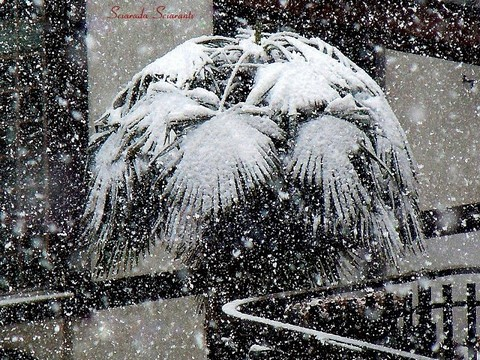 Nevicata su palma