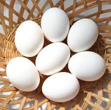 تفسير حلم البيض في المنام لابن سيرين