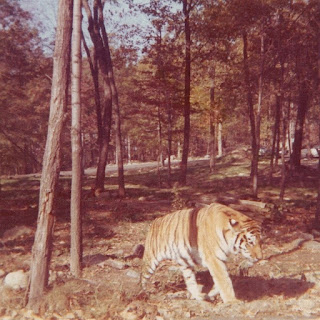 Why Wild animals attack increased in human area