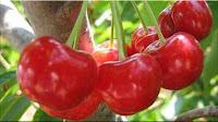 gambar buah ceri