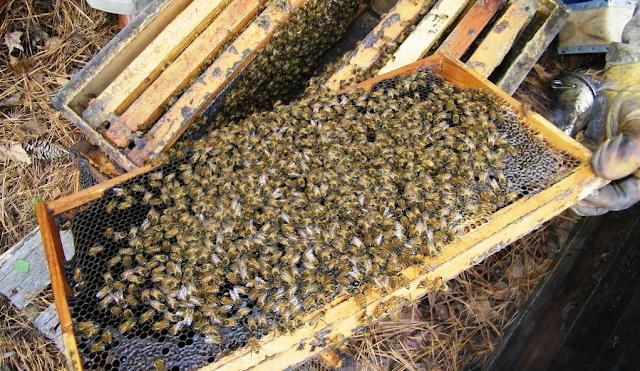 Μελισσοκομικοί Χειρισμοί Μαρτίου
