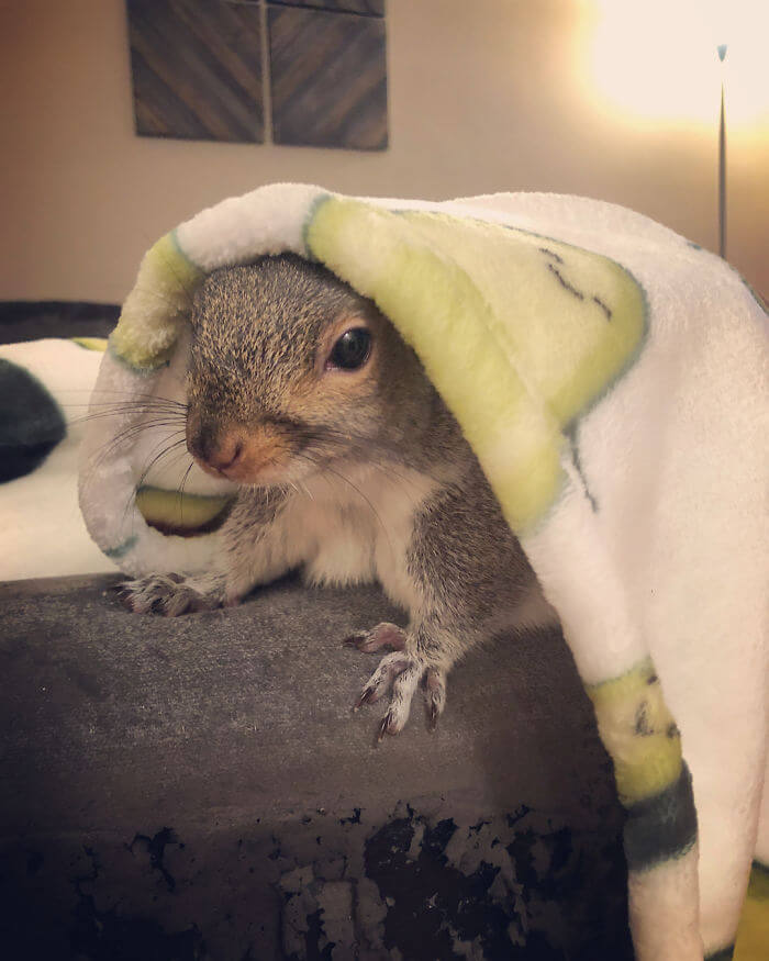A Man Adopted A Baby Squirrel He Found On His Bed And It's The Most Adorable Story We Read Today