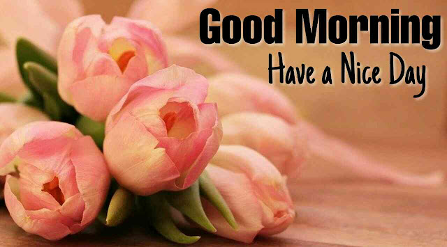 Beautiful Good Morrning image with pink rose bouqet flower have a nice day