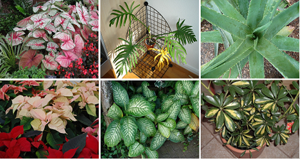 Deadly Plants That You Should Remove From Your Home Immediately