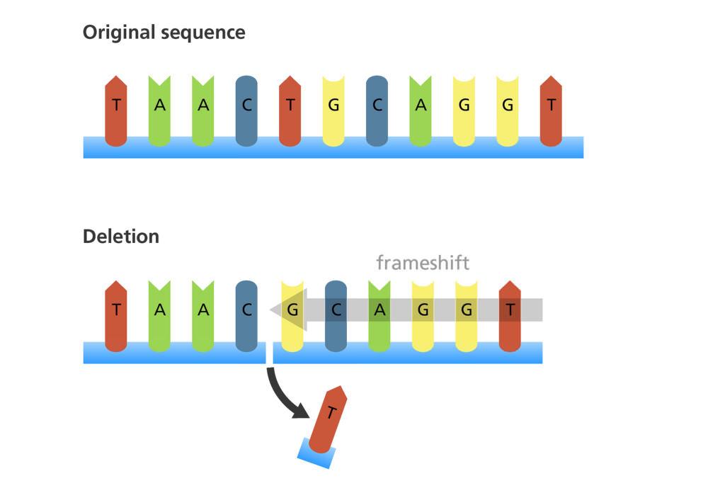 Aprendiendo emPLEando inGENio: Mutaciones génicas