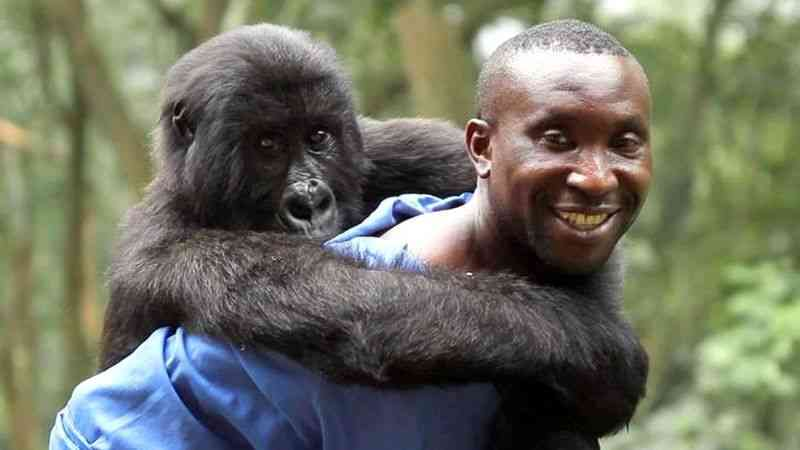 The beloved gorilla Ndakasi, who became famous in the world, passed away Beloved gorilla Ndakasi, who became famous after a selfie with a ranger went viral, has died at the age of 14, after suffering from illness.