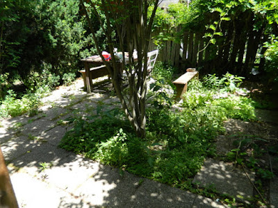 Leslieville garden cleanup before weeding by Paul Jung Gardening Services Toronto