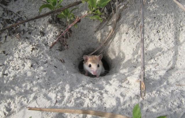 حسن و العلوم من أين للفئران بفكرة الجحر