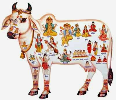 Importance of Cow Worship Before Diwali