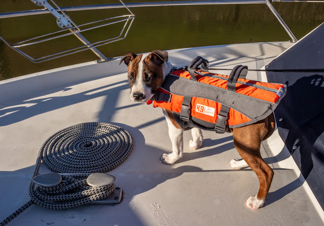 Photo of Ruby in her lifejacket on Ravensdale's foredeck