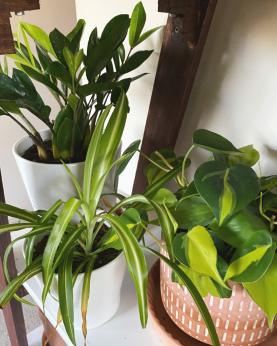 how to take care of plants in winter
