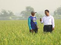 Lowongan Kerja Wefarm (PT Sinergi Agro Sukses) Februari 2021