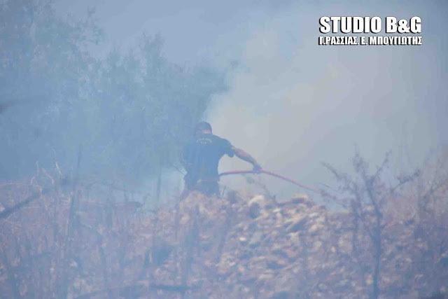 Πυρκαγιά σε αγροτική περιοχή των Ιρίων Αργολίδας
