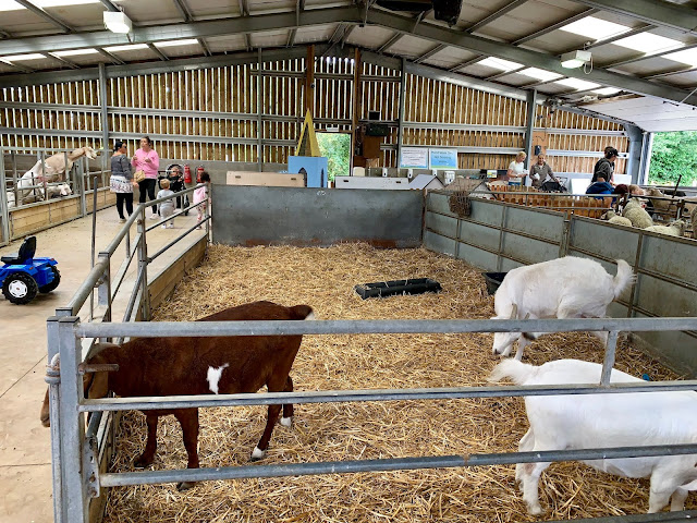The Barleylands Animal Encounter Barn with enclosures visible with goats and sheep