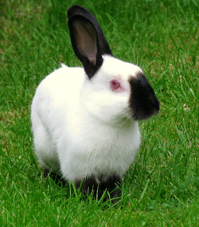 Why rabbits have long ears : a Mayan folktale