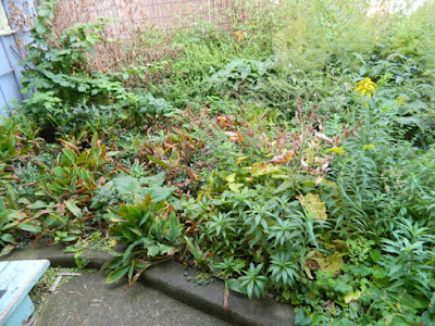 Toronto Little Italy Fall Front Garden Cleanup Before by Paul Jung Gardening Services--a Toronto Gardening Company