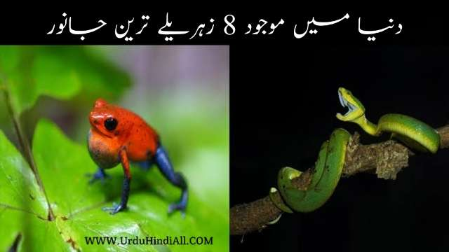 deadliest-animals-in-the-world-urdu-hindi