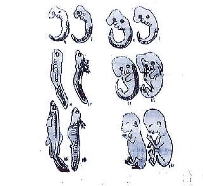 भ्रूणविज्ञान से प्राप्त प्रमाण