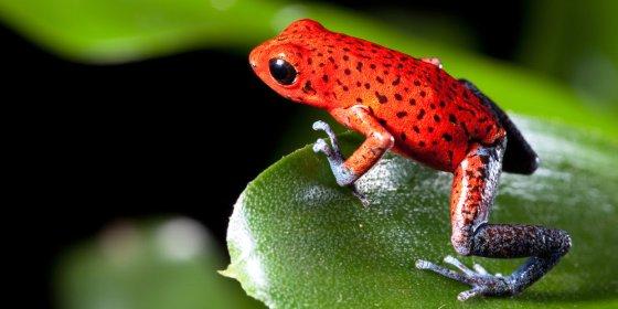 CIRI CIRI KATAK • Haiwan Amfibia Yang Hidup Di Dua Alam