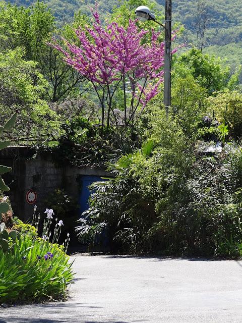 avril, jardin fébrile - Page 7 DSC07192