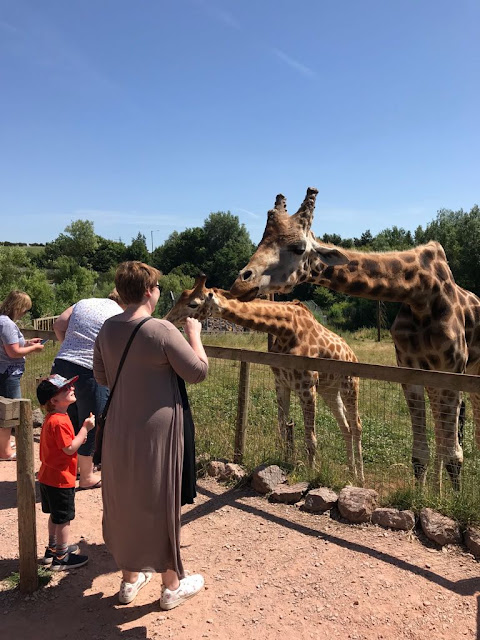 Mum and son feeding giraffes