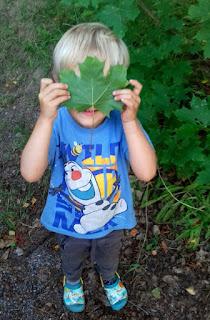 lapsi poika lehti vaahtera vaahteranlehti