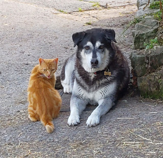 The Writer's Pet: A dog and one of the cats of bestselling author Roz Watkins