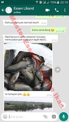 Essen Untuk Umpan Ikan Nila Galatama