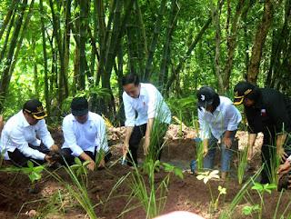Cegah Erosi di Wonogiri. Jokowi Galakkan Penanaman Akar Wangi