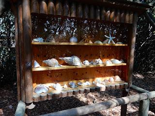 Parco Gallorose(ガッロロゼ公園)貝殻の展示