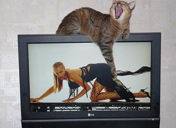 2. Cheeky Feline