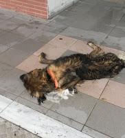 Αποτέλεσμα εικόνας για (φόλα), θανάτωσε δύο αδέσποτα σκυλιά.