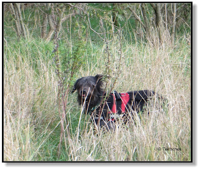 Hund auf Jagd
