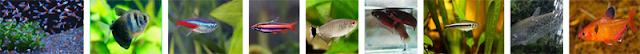 Rekomendasi Ikan Hias Untuk Aquascape Berukuran Kecil