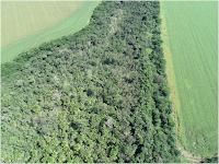 Vista aérea de uma floresta de 10 anos, plantada a partir da muvuca, na Fazenda Schneider, zona rural de Querência (MT) (Foto: ZFwy7ucFgJCsYD9OADG9iPP0hF2jS6FJCKpgjpQz.jpg)